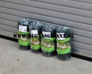 Groen geplastificeerd boogjesgaas voor uw tuin. Boogjesgaas is de meest traditionele en eenvoudige omheining voor uw tuin. Boogjesgaas 40 cm te koop in Opheusden bij De Gaasgigant tegen scherpe prijzen.